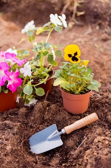 Flower pots on soil with tool