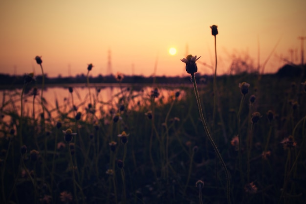 Flower at the river
