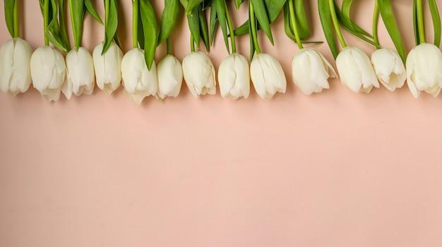 밝은 파스텔 표면에 신선한 봄 흰색 튤립의 꽃행, 복사 공간, 가로 방향, 근접