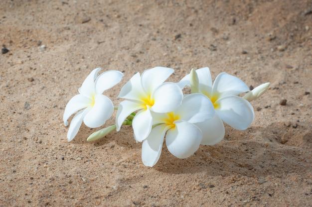 Flower to sand beach