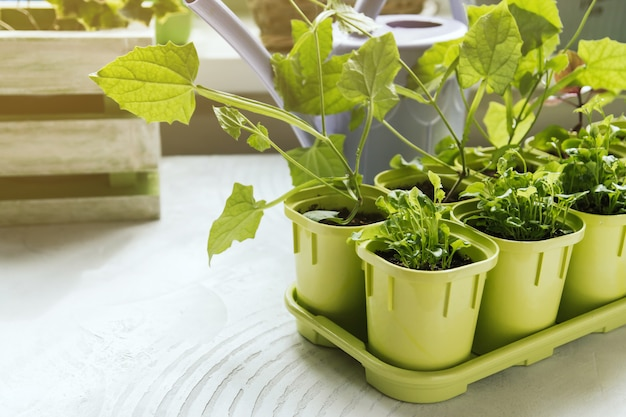 Flower seedlings in green plastic pots.