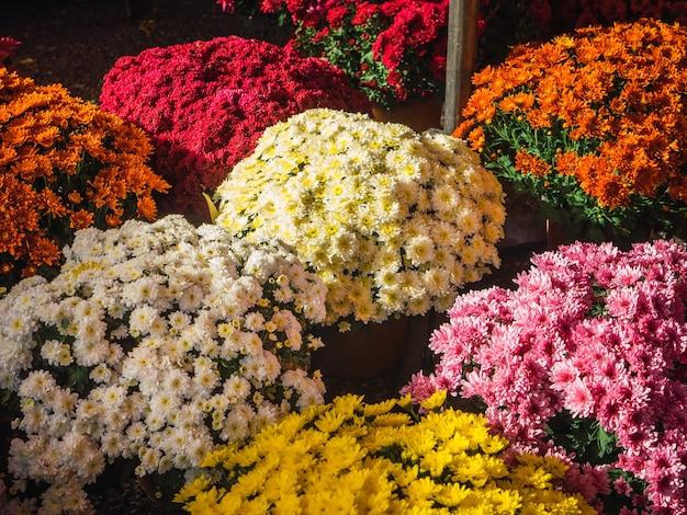 フラワーショップのコンセプト混合色とりどりの花の花束のクローズアップ壁紙