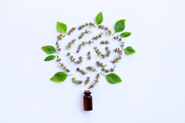 Flower of sweet basil and leave with drop bottle of essential oil herb on white