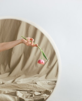 白い背景の上の女性の手の反射ミラーの花のチューリップ