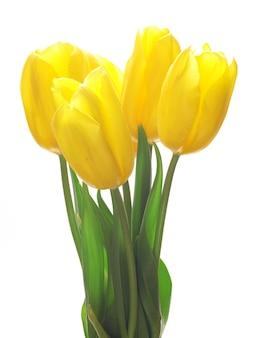 Цветочный тюльпан