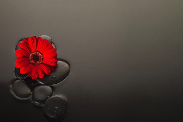 Flower and volcanic stones