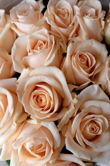 꽃 벽, 천연 크림 장미 벽, 천연 크림 장미