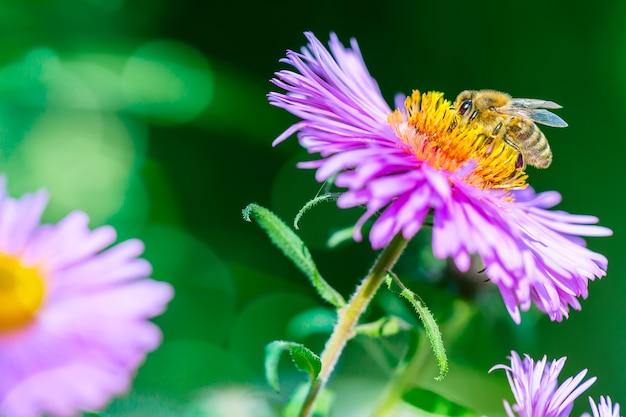 蜜を集める蜂と花。