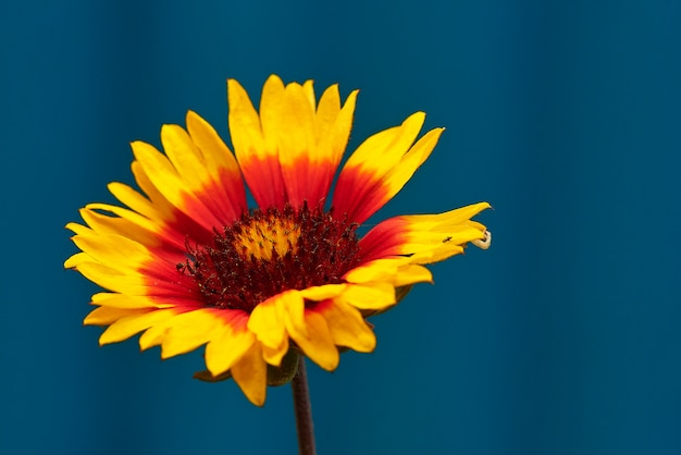 Flower with colorful petals.