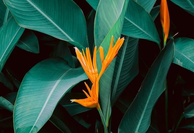 Цветок с темно-зелеными листьями в тропических джунглях природы