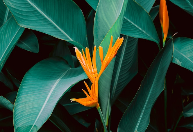 Flower with dark green leaf in tropical jungle nature