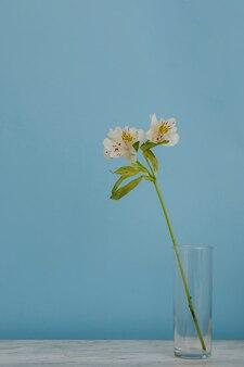 테이블에 있는 유리 꽃병 안에 긴 줄기가 있는 꽃과 파란색 배경
