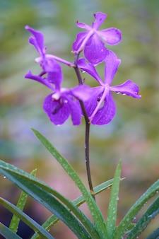 紫色の花びらを持つ花