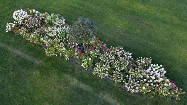 緑の芝生のドローンビューにカラフルなアジサイと花壇