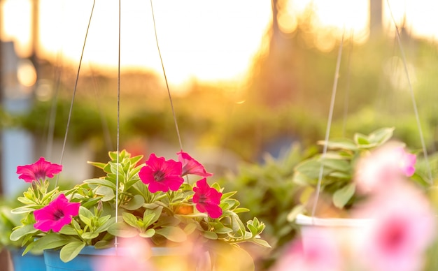 Flowerbed with multicoloured petunias