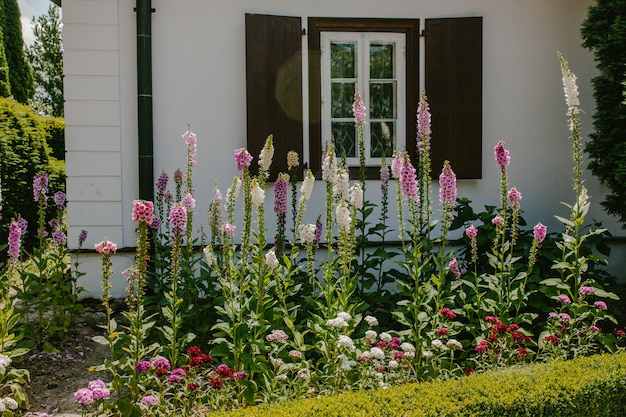 A flowerbed with pink bells in front of the house