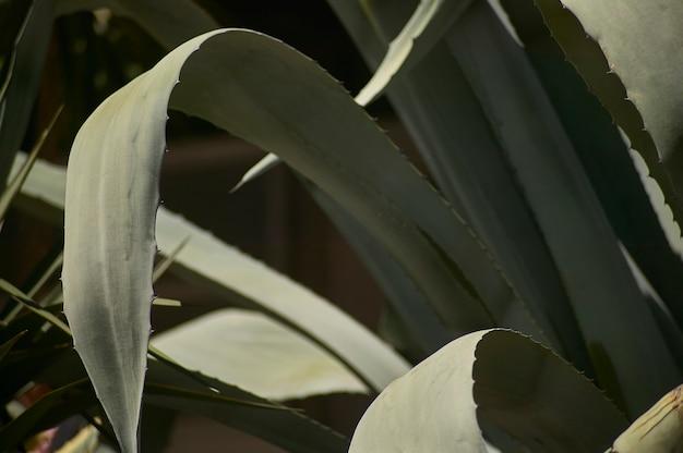 알로에 식물을 비롯한 다양한 지방 식물이 있는 화단.
