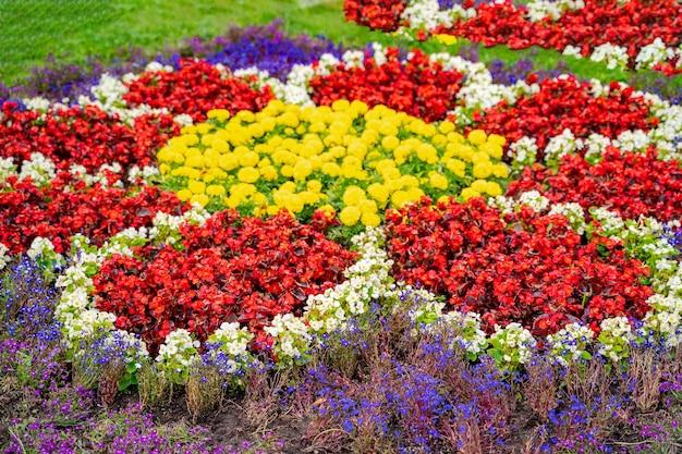 Клумба с желтыми и красными цветами. ландшафтный дизайн. разноцветные цветы.