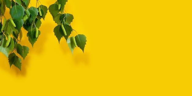 Цветущие ветви березы на желтом фоне, с пространством для текста. ветка березы с зелеными листьями и сережками