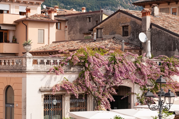 Flowering bougainvillea wraps around the walls of the house
