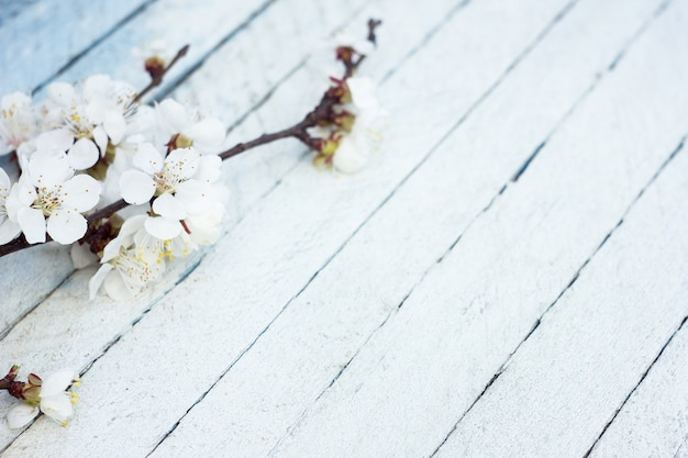 Flowering branch of apricot on a light wooden background, spring background