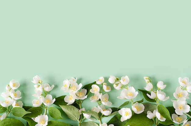 Цветущая ветка жасмина.