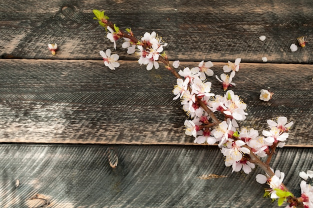 Flowering branch on the old wooden background. spring blossom.
