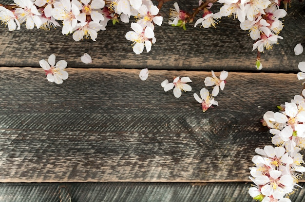 Flowering branch on the old wooden background with sun rays. spring blossom.
