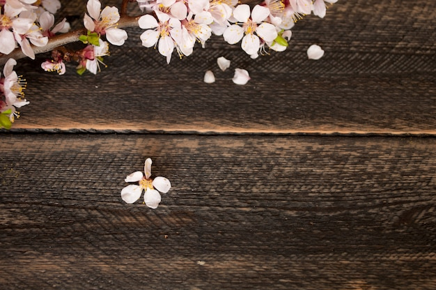 Flowering branch on the old wooden background