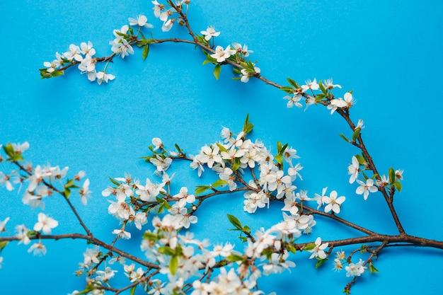 파란색 배경에 흰색 꽃이 피는 꽃 가지, 텍스트를 위한 장소