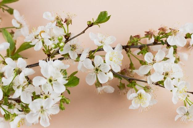 パステル調の背景に開花枝。創造的な春のコンセプトです。