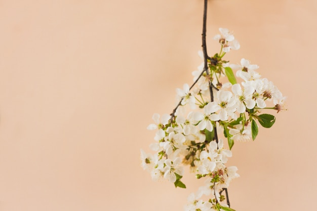 Flowering branches on a pastel background with a place for an inscription.