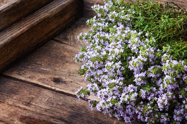 백리향의 꽃 덤불