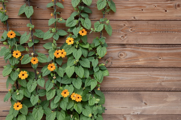 Flowering bush of orange summer flowers on a surface of wooden brown boards.