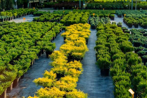 조경 작업을 위해 정원 센터의 욕조에 꽃 덤불