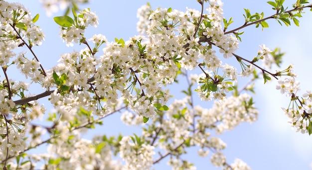 青空に咲く桜