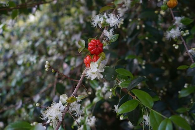 桜がぶら下がっている開花桜