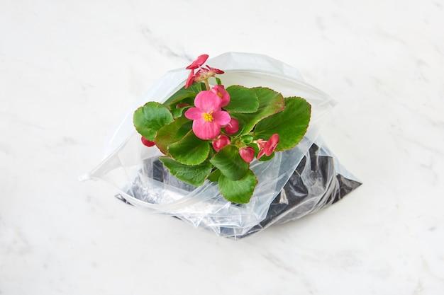 이중톤 배경에 비닐 봉지에 멋진 꽃과 함께 꽃이 만발한 상록 식물. 생태 및 환경 개념입니다. 평면도.