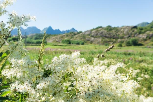 여름, 노르웨이 초원에 꽃 잔디