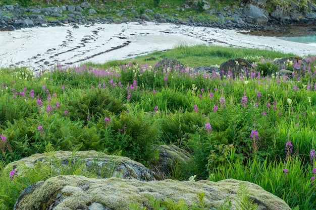 모래 해변, lofoten, 노르웨이에 이끼로 덮여 꽃 허브와 돌