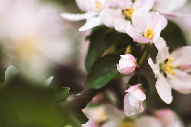 春に開花。美しい初期の花。