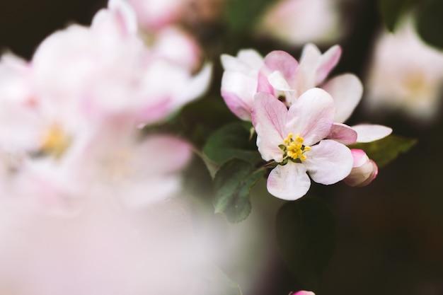春の開花クローズアップ