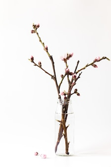 開花桃の枝、ピンクの花。