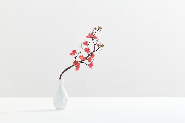 Flowering pink cherry branch in white vase on white background
