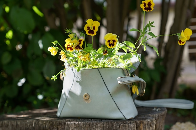 Flowering plant pansies with small yellow flowers in old leather women bag outdoor. zero waste.