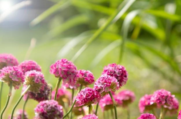 선택적 초점 흐릿한 배경에 꽃 진달래 지점