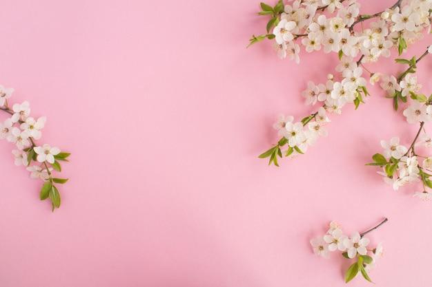ピンクに分離された開花木の枝