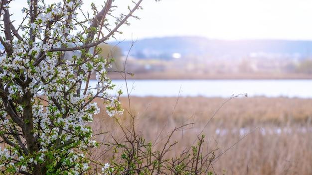 晴天時の川沿いの開花木
