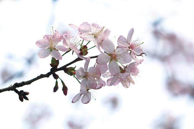 Цветущее дерево в весеннем саду