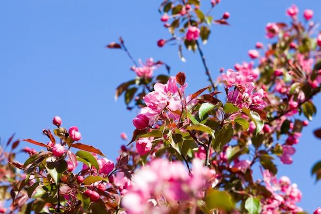 春に開花する木